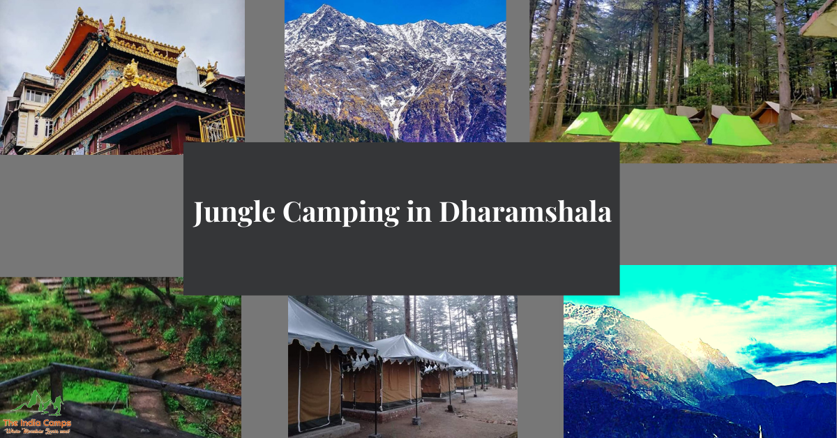 Jungle Camping in Dharamshala